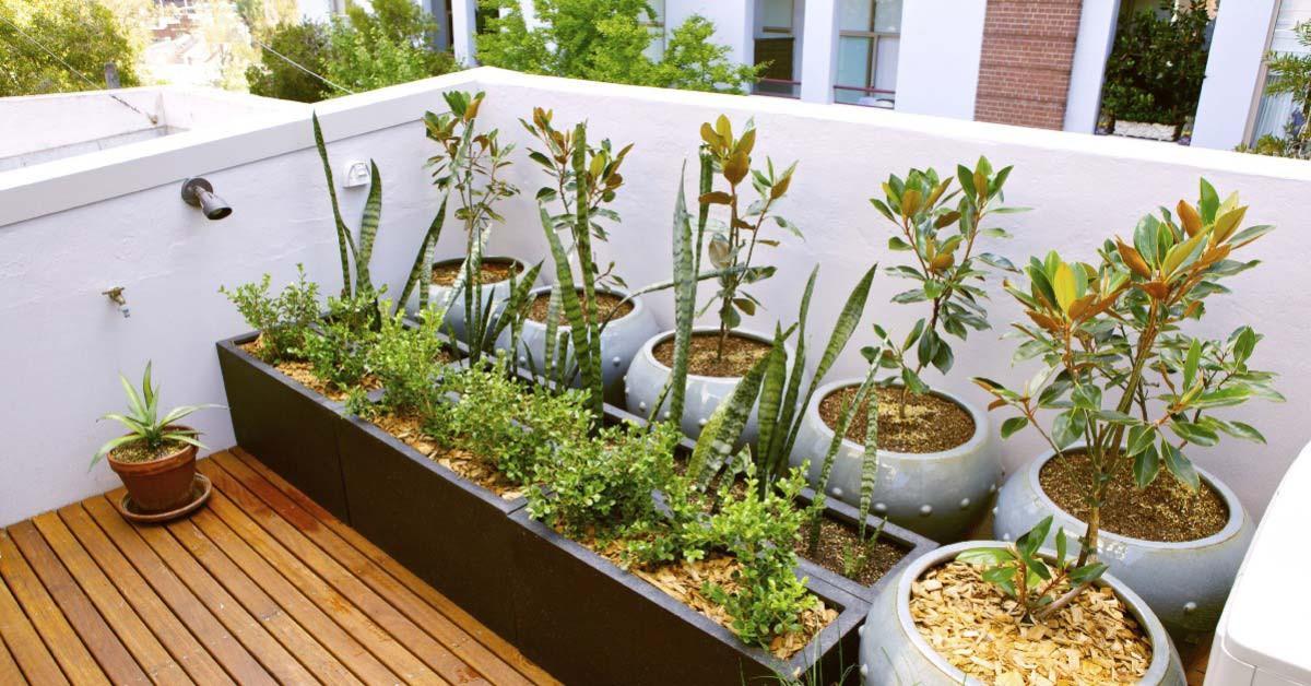 Оранжерия или градина