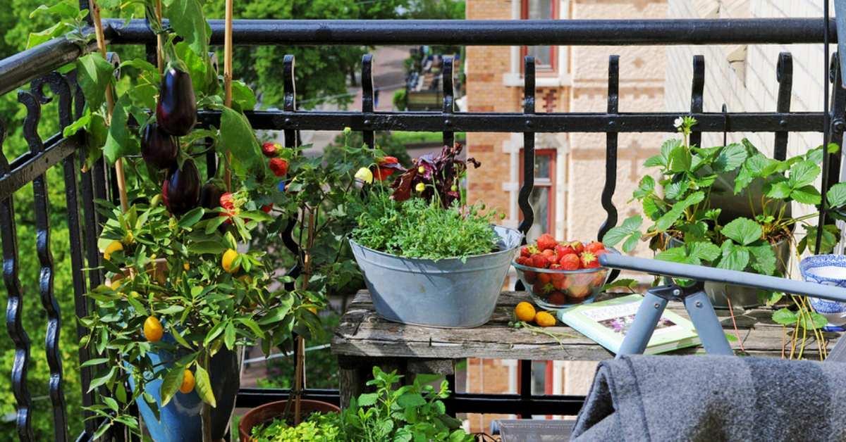 Полагане на основите на зеленчуковата градина