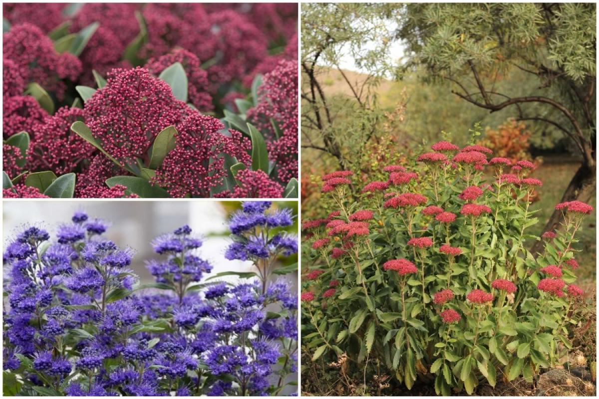 Храстите през есента - една цветна корона