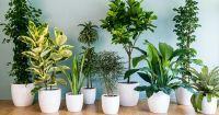 Грижа за растенията през зимата в 4 лесни стъпки
