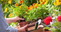 Основни тенденции за неповторима градина през 2020 година (част втора)