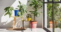 4 саксийни растения, подходящи за спалня