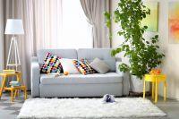 3 плодни дръвчета, които можете да отглеждате във всекидневната си!