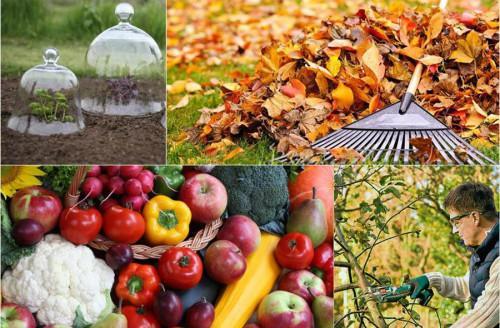 Основни грижи за градината през есенния сезон