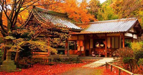 Възхитителна и красива градина през цялата есен