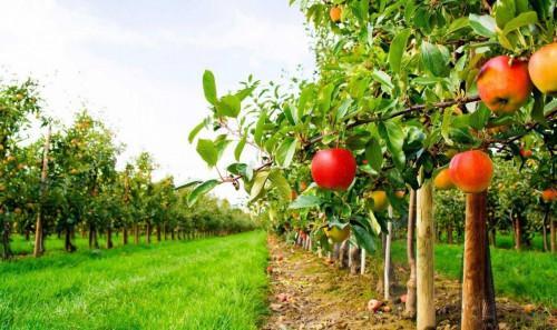 Овощна градина – мечтата става реалност!