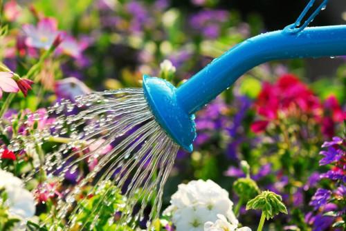 Правилно поливане на цветя