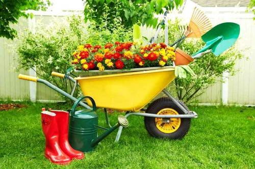 Пътеводител за начинаещи градинари: От запустелия двор до градината
