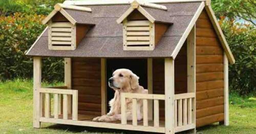 5 съвета за комфорта на вашия домашен любимец, обитаващ колибка в градината