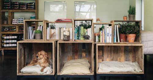 Най-подходящите подови настилки за домове с домашни любимци