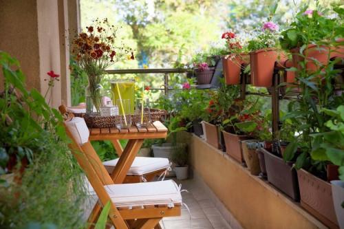 Кои са най-подходящите цветя за балкона?