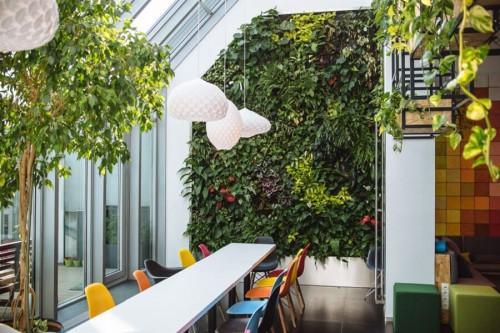 Офисът се превръща в естетическо пространство със стена от живи растения