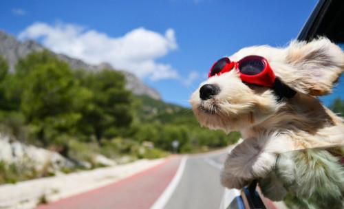 Ваканция с куче - какво да не забравим да вземем!