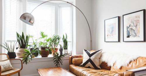 5 красиви растения, които допринасят за чистия въздух у дома