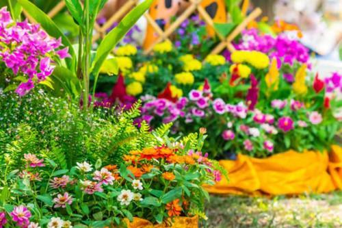 Най-непретенциозните цветя за двор