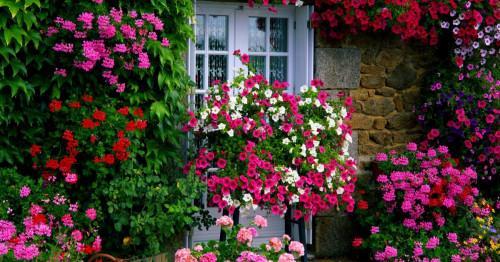 Как да осигурим на градината и цветята си всичко, от което се нуждаят?