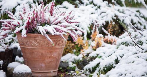 Зимни цветя за двора и терасата
