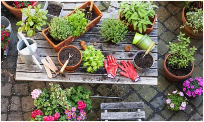 Направете си домашна градина