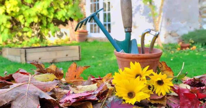 Кога е най-доброто време за почистване на двора?