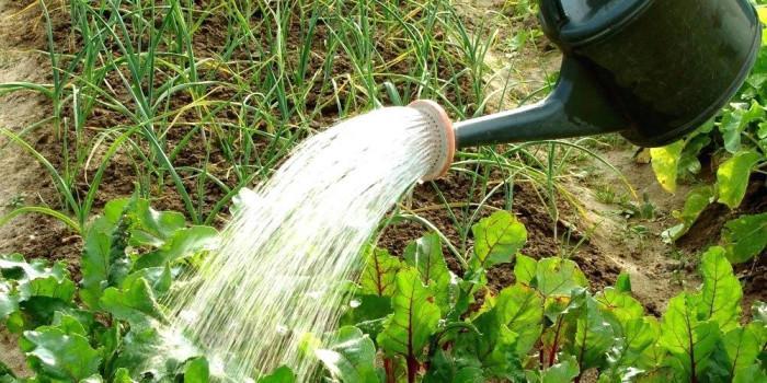 От колко вода се нуждае едно цвете?