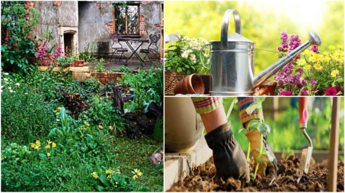 """Как да докараме запустелия двор до """"градинско състояние""""?"""