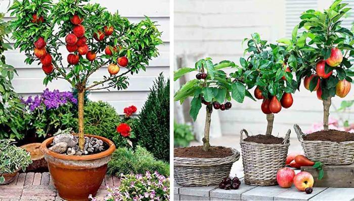 Дърво в саксия - красиво решение за малки дворни пространства