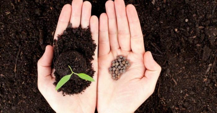 Подходящото време за садене на цветя от семена