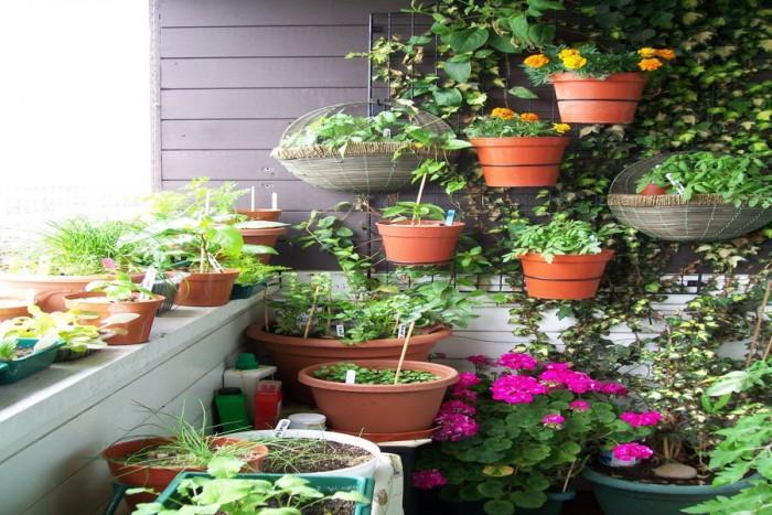 Как да създадете билкова градина на балкона?