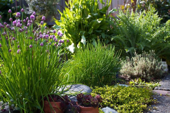 Билкова градина подходяща за малки пространства