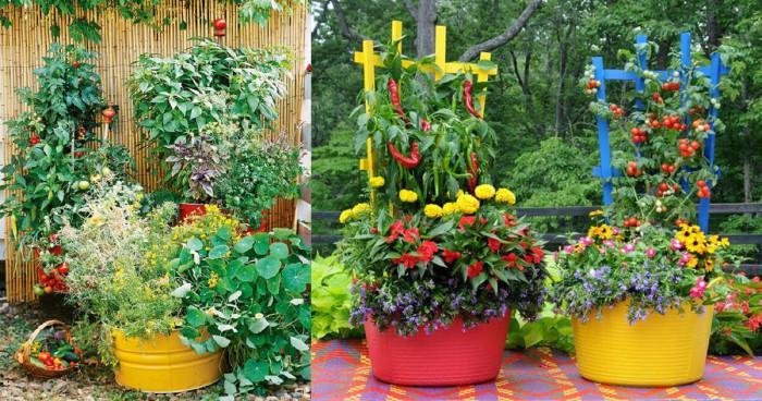 Естетично и полезно – зеленчуци и билки във вашата градска градина