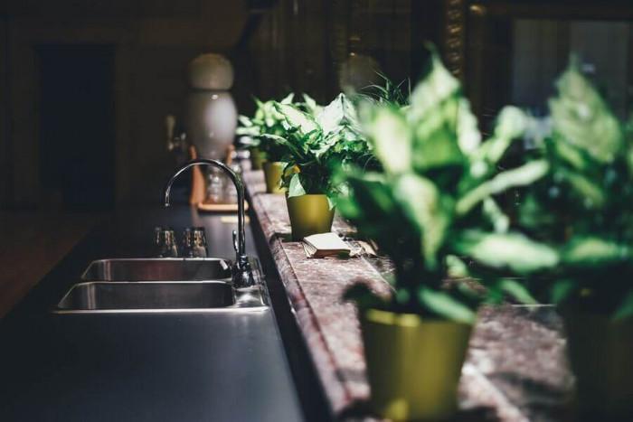 Украсете саксиите и разположете високи стайни растения