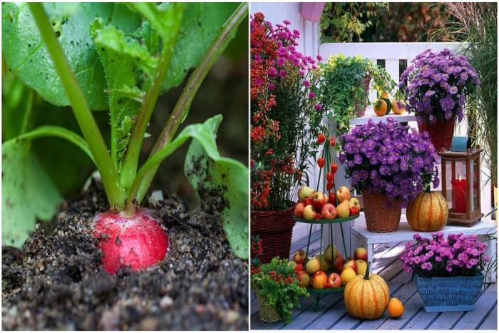 Растения, с които да направим градината си по-цветна през есента