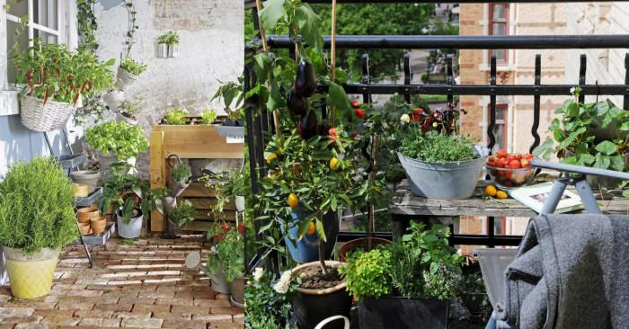 Листни зеленчуци и подправки - идеален вариант