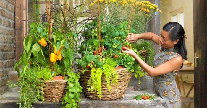 Малки тайни за зеленчукова градина на балкона