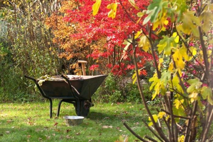Подрязване на дърветата и храстите през есента е наложително