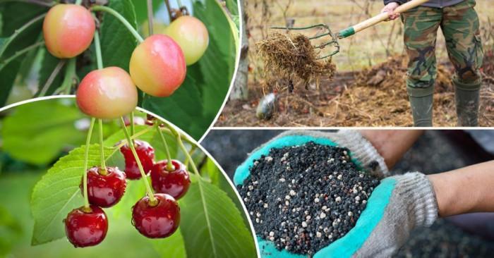 Засадете нови дървета, храсти и растения