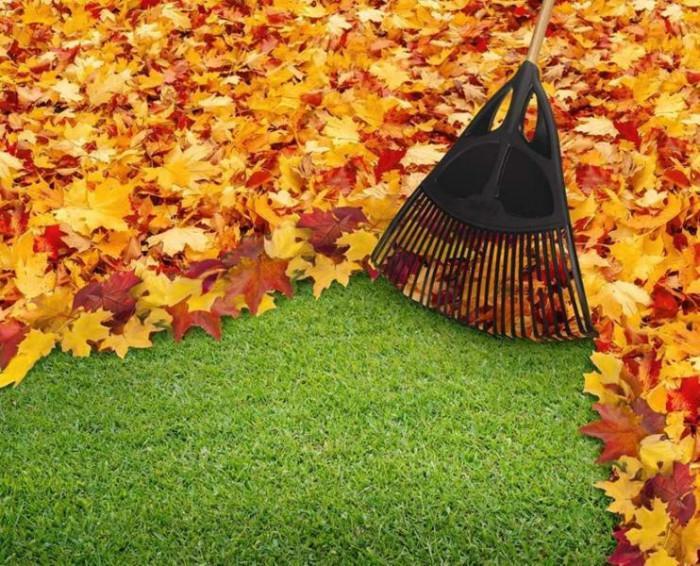 Направете профилактично санитарно почистване на градината