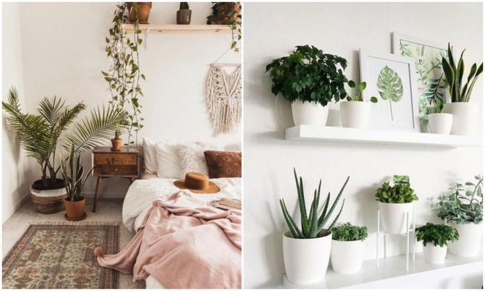Добавете растения и свежи аромати