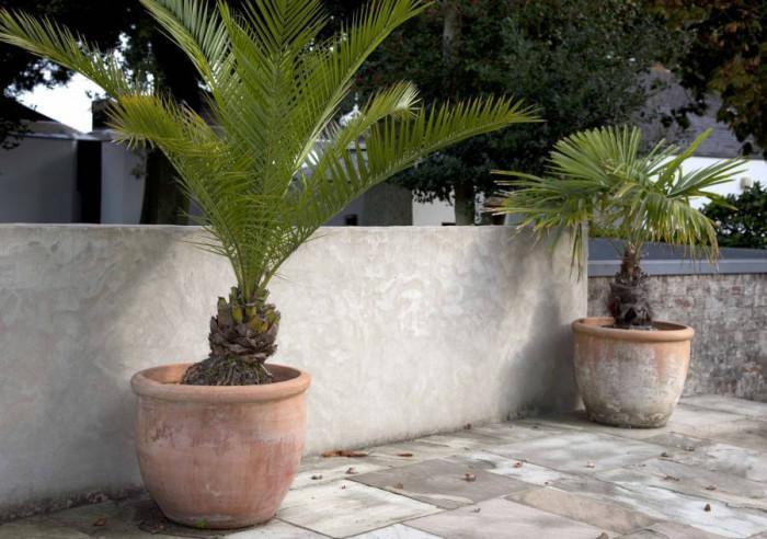 Как да се грижим за палмите през зимата?