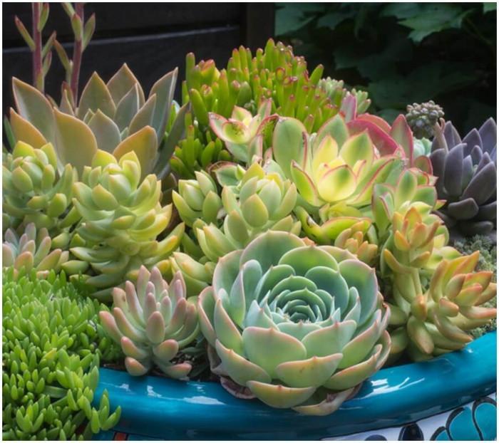 Сукулентните растения са върхът!