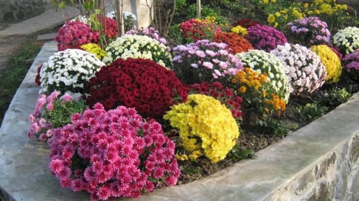 И още нещо важно за непретенциозните цветя за двор…