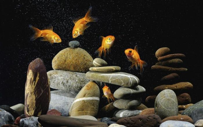 Красотата на аквариума изисква много грижи
