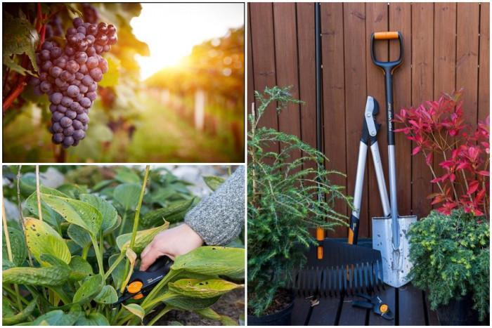 Няколко съвета как подготвим градината за есента