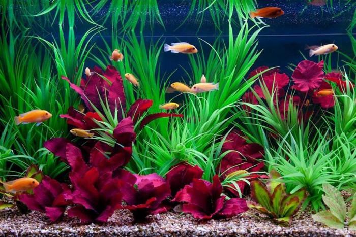 Флора и фауна – аквариумът оживява