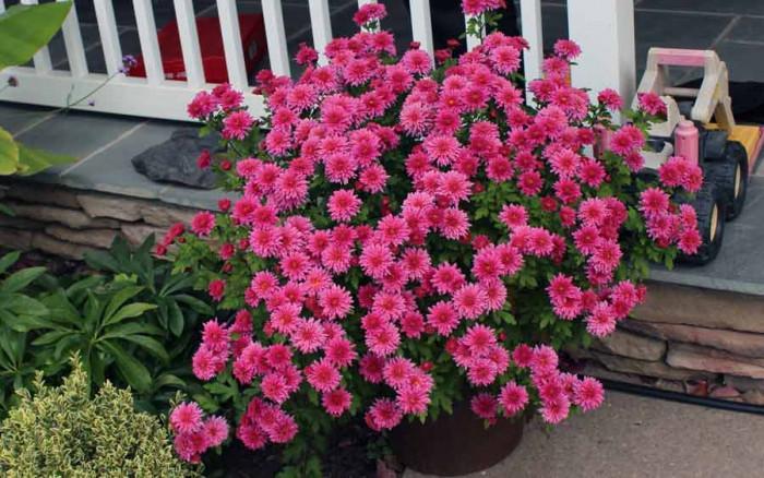 Есенни цветя в двора – какво трябва да знаем
