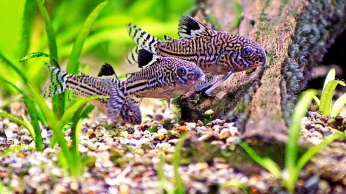 Морско дъно на аквариума – нужни са специални елементи