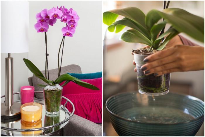Как правилно да поливате орхидеята?