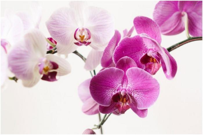 Ключов елемент в отглеждането на орхидеите – светлината