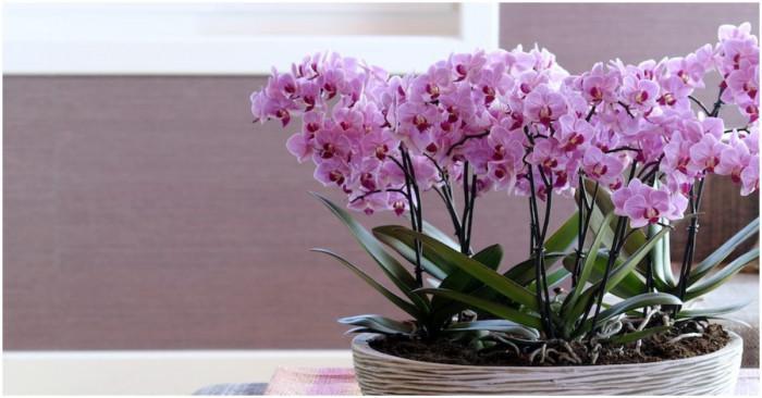 Как да се грижим правилно за орхидеите?