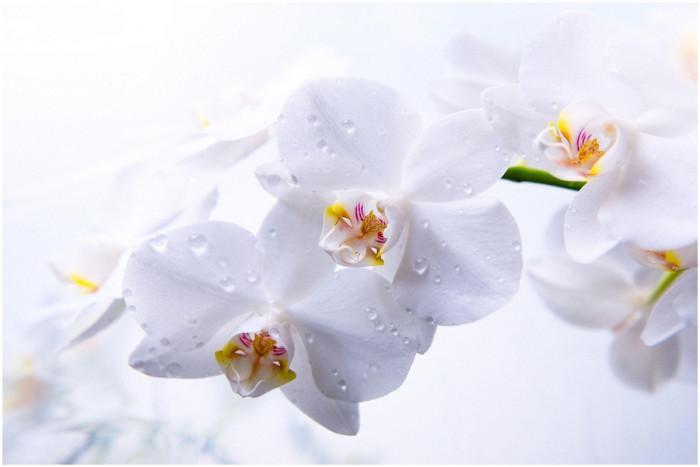 Следете температурата в стаята, в която се намира орхидеята ви